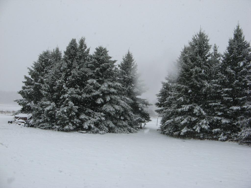 SnowydayMay22013 002