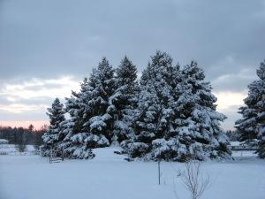 Snowpinesdec272014 005